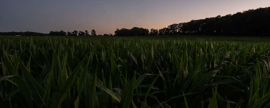 evening farming crops